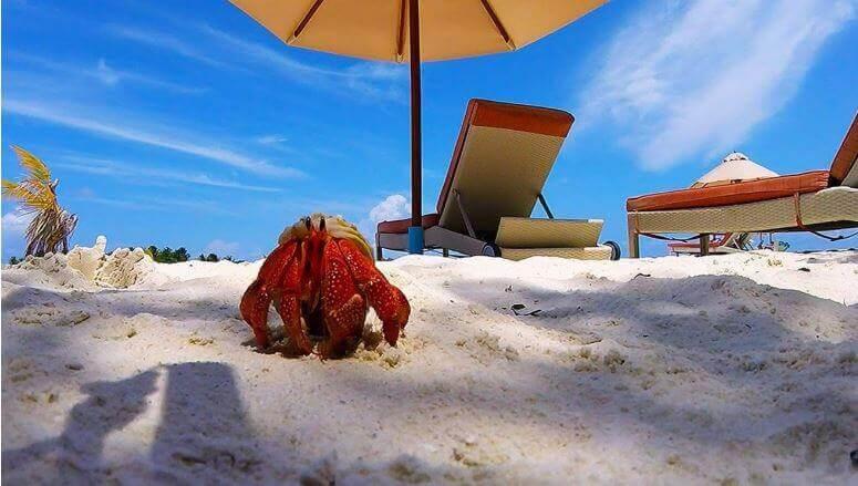 Der Sommer ist da Ihr krossen Krabben!
