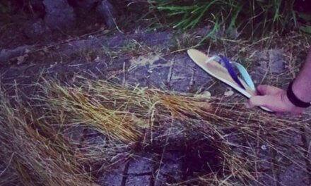 Wie ich mit Flipflop die Natur rettete