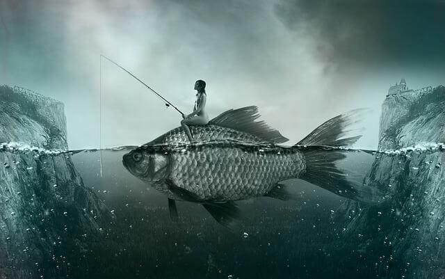 fish-1372923_640_mini