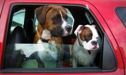Tipps für den Campingurlaub mit Hund